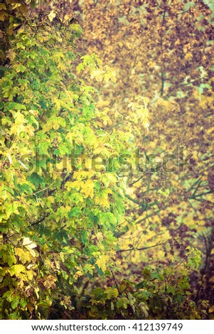 Scenery of autumnal vegetation. Leaves and branches in fall season. Nature outdoor concept.  - stock photo