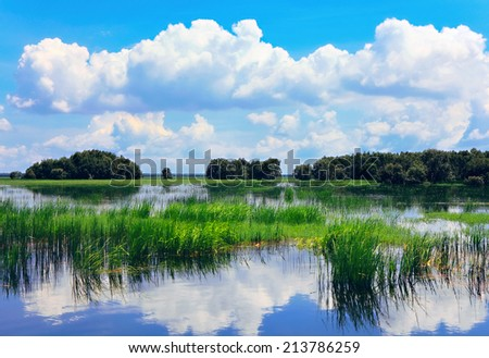 Scenery of  Dong Thap Muoi swamp, Dong Thap province, southern of Vietnam  - stock photo
