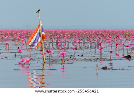 Scenery of The Red Lotus Sea Is A World's Strangest Lakes at Udonthani Province of Thailand. - stock photo