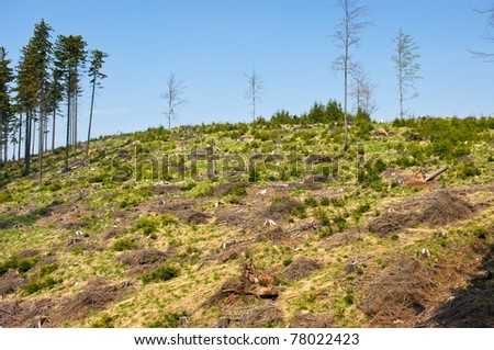 Scenery with cut-out forest and blue sky - stock photo