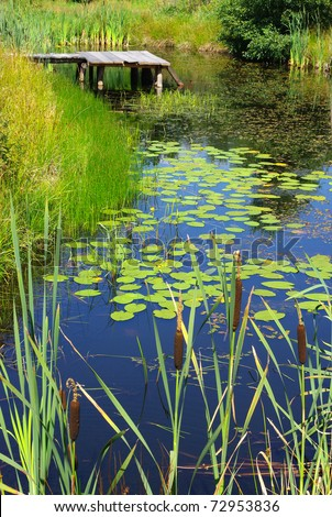 Scenery with pond and water plants - stock photo
