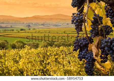 scenery with red wine