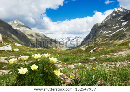 Scenic Alpine mountains with flowers valley landscape background