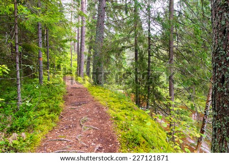 scenic and beautiful tourism trail in the woods near river. latvia. - stock photo