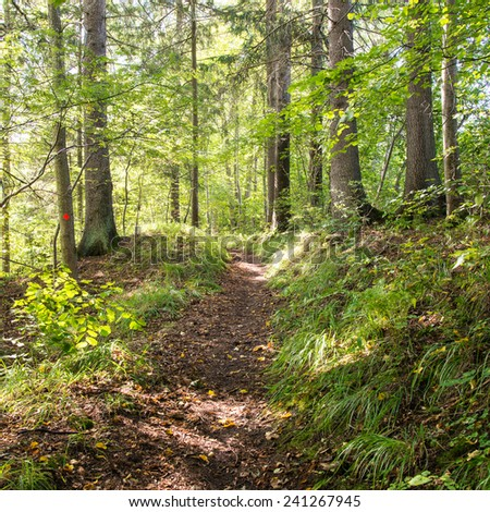 scenic and beautiful tourism trail in the woods near river. latvia. - square image