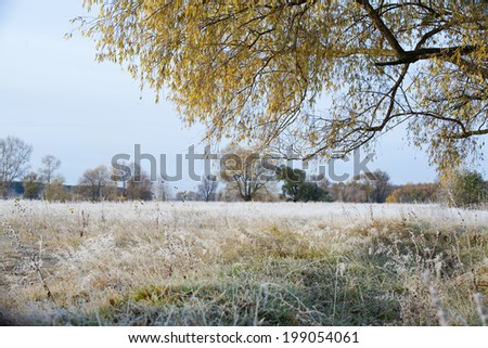 Scenic autumn landscape  oak grove with yellowed leaves, frost on the grass on a cold morning - stock photo