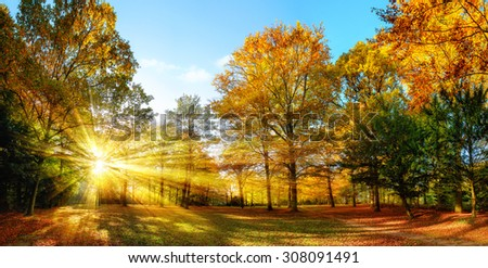 Scenic autumn panorama with the sun shining through the gold foliage and illumining the forest landscape - stock photo