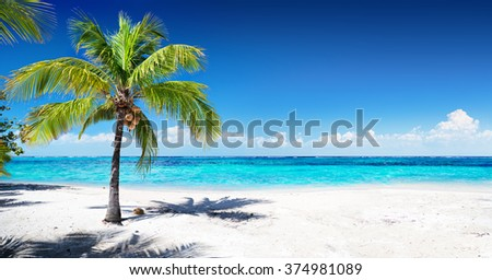Scenic Coral Beach With Palm Tree  - stock photo