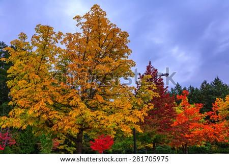 Scenic decorative park-garden on Vancouver Island, Canada. - stock photo