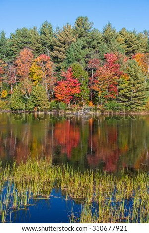 Scenic Fall portrait of maple and pine trees reflected on a lake near Algonquin Park (Ontario) - stock photo