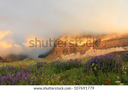 Scenic field of Lupin in the Wasatch mountains of Utah. - stock photo