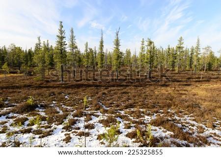 scenic forest landscape in autumn in the Russian taiga - stock photo