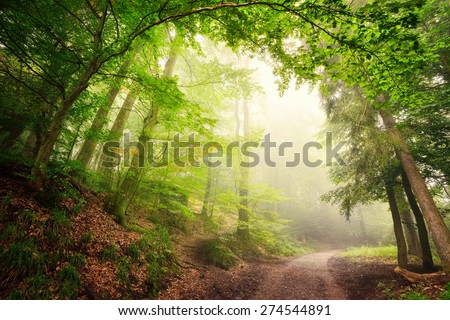Scenic forest landscape with a large natural archway composed of green trees over a path inviting into the misty light - stock photo
