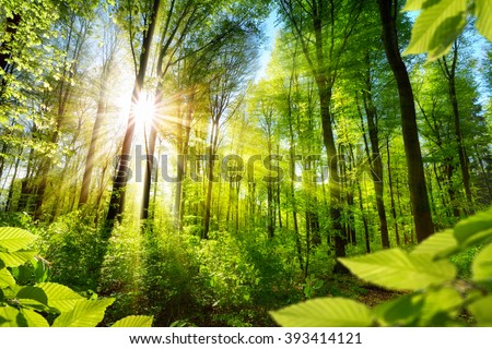 Scenic forest of fresh green deciduous trees framed by leaves, with the sun casting its warm rays through the foliage - stock photo