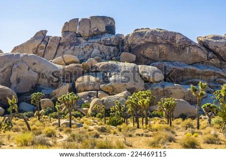 scenic golden rocks  in Joshua Tree National Park  in sunset - stock photo