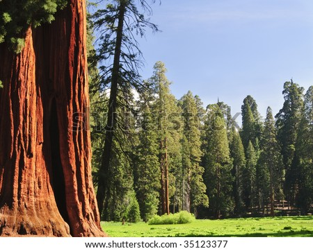 Scenic in Sequoia National forest, CA - stock photo