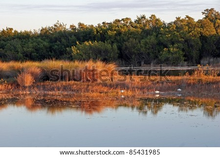 Scenic Landscape Ding Darling Wildlife Refuge Florida - stock photo