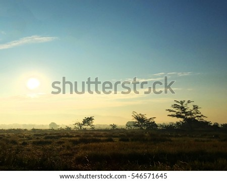 Scenic landscape of rice fields in the early morning when sunrise at Chiang Rai,Thailand.