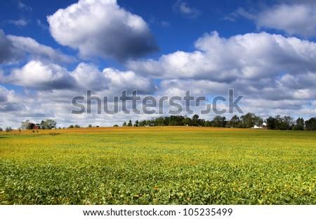 Scenic landscape of Soy bean fields - stock photo