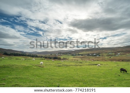 Scenic Landscape View of Mountain, Hill, and field full of sheep in Scottish Highlands.