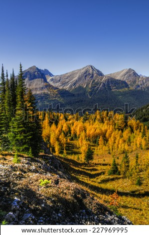 Scenic Landscapes of a high mountain valley and golden Larch Trees, Burstall Pass area of Kananaskis Country Alberta Canada on a sunny Autumn afternoon.