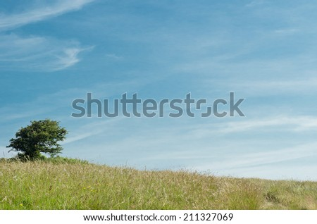 Scenic nature background.  A single tree on a gently sloping grassy hill  against a blue sky in the English countryside. - stock photo