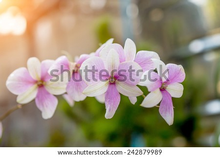 scenic orchids from Orchid Garden - stock photo