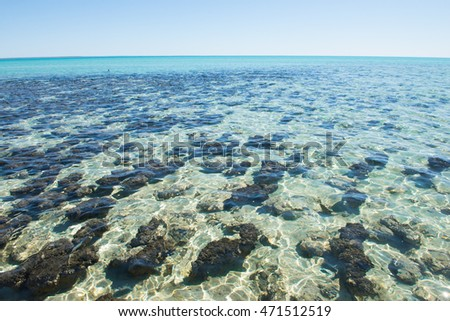 Scenic panoramic view over Stromatolites at World Heritage Area Hamelin Pool in Shark Bay, Western Australia.
