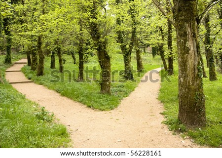 Scenic path across Azores rain forest at S. Miguel Island - stock photo