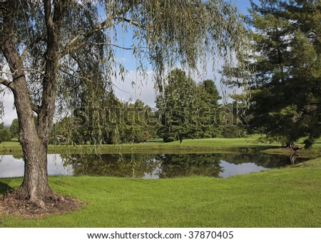 Scenic pond and willow tree, blue sky and white clouds