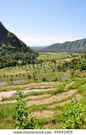 Scenic rice paddies in a valley in Bali, Indonesia