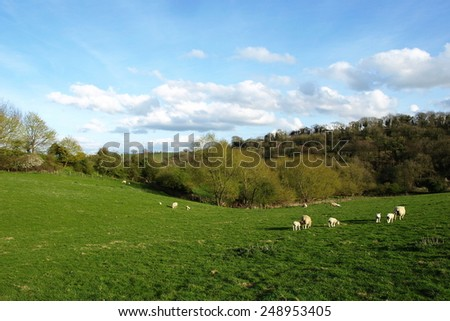 Scenic Springtime View of a Beautiful Green Farmland Field with Grazing Sheep in the Avon Valley in England  - stock photo