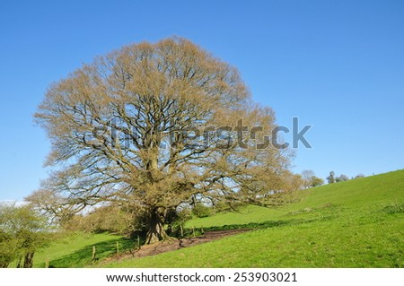 Scenic Springtime View of an Oak Tree Standing in a Green Field with a Beautiful Sky Above - stock photo