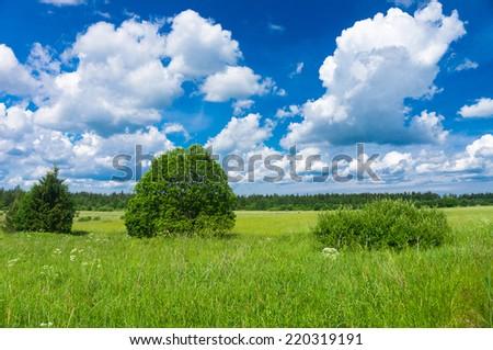 Scenic View Field Freedom  - stock photo