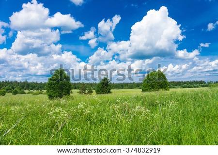 Scenic View Grass Lawn  - stock photo