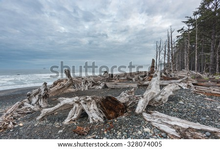 scenic view in Rialto beach in the morning time, Olympic National park,Washington,USA. - stock photo