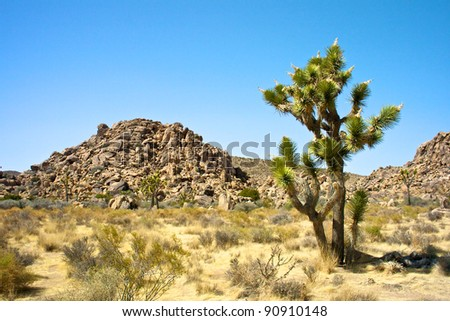 Scenic view in the Joshua Tree National Park, California, USA