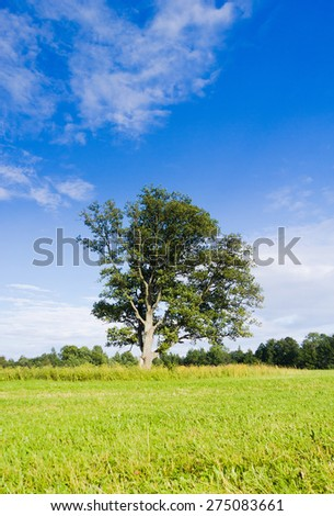 Scenic View Lonely Tree