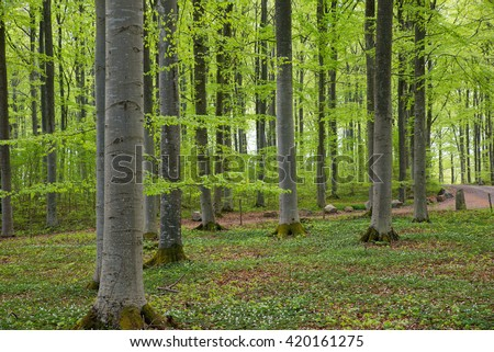 Scenic view of a beech wood in spring - stock photo