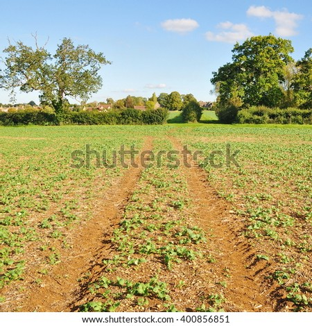 Scenic View of a Dirt Track and Leafy Crops Growing on Farmland - stock photo