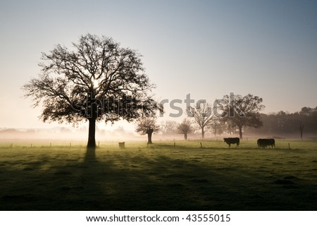Scenic view of a foggy morning in autumn - stock photo