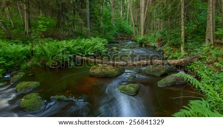 Scenic view of a river valley in a primeval forest. - stock photo