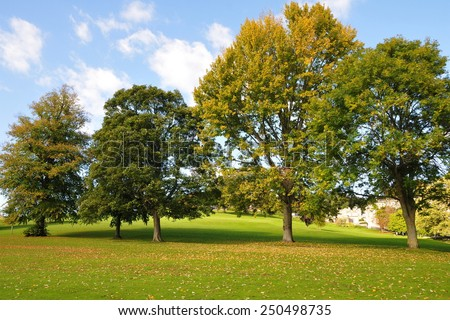Scenic View of a Row of Trees in a Beautiful Spacious Green Park - stock photo