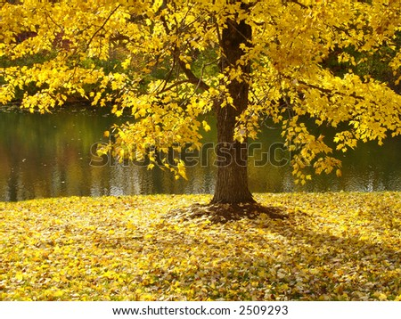 Scenic view of a tree in fall along the river - stock photo