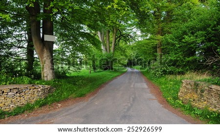 Scenic View of a Tree Lined Country Road - stock photo