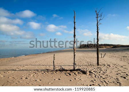 Scenic view of a wild baltic sea beach with old tree remains. - stock photo