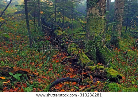 Scenic view of beautiful misty forest with lush foliage and log - stock photo