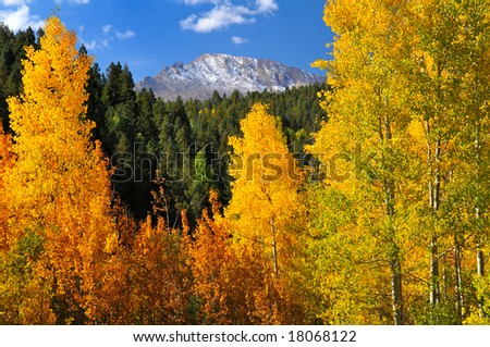 Scenic view of brilliant aspen trees, in the Pike National Forest, of Colorado, during the autumn season with Pikes Peak showing through - stock photo