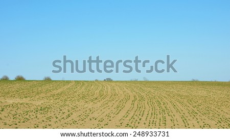 Scenic View of Crops Growing on Dry Farmland in Early Spring - stock photo