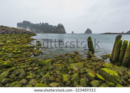 scenic view of First beach in Olympic national park - stock photo